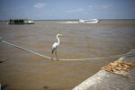 A heron balances on a rope that ties a fishing boat to the dock at the Ver-o-Peso riverside market in Belém, Brazil, Sunday, Sept. 1, 2019. Belém is located on Guajara Bay which is formed by the confluence of the Para and Guama Rivers. (AP Photo/Rodrigo Abd)