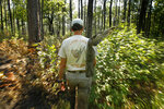 Nick Haddad heads to a swamp in search of the rare St. Francis' satyr butterfly, at Fort Bragg in North Carolina on Monday, July 29, 2019. Haddad has studied the vanishing butterflies in hopes of understanding why they are disappearing, and why they are worth saving. (AP Photo/Robert F. Bukaty)