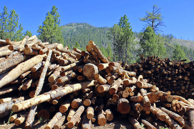 Stacks of logs in the San Francisco Peaks of the Coconino National Forest in northern Arizona await cutting and splitting into firewood on June 8, 2020. Tall stacks of logs left over from a forest thinning project in mountains overlooking Flagstaff are being processed into thousands of cords of free firewood to provide a winter heat source for northern Arizonans, including residents of the Navajo and Hopi reservations. (AP Photo/Paul Davenport)