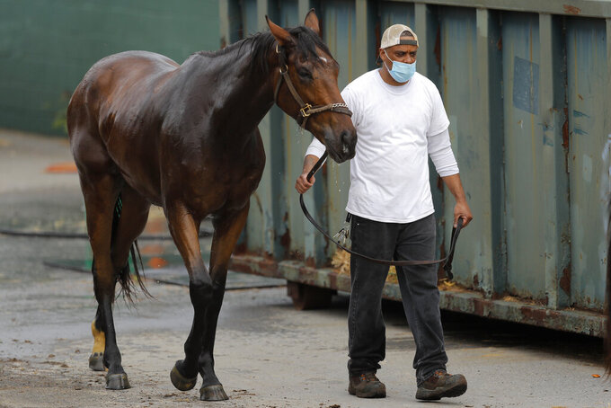 An aide wears a face mask while walking with a horse to a stable after a bath at Pimlico Race Course, Friday, May 15, 2020, in Baltimore. Horse racing is in a state of transition at a time usually reserved for Triple Crown season. The Preakness would have been run Saturday, May 16, 2020, in Baltimore. But Pimlico Race Course and many tracks across North America remain dark because of the coronavirus pandemic. (AP Photo/Julio Cortez)