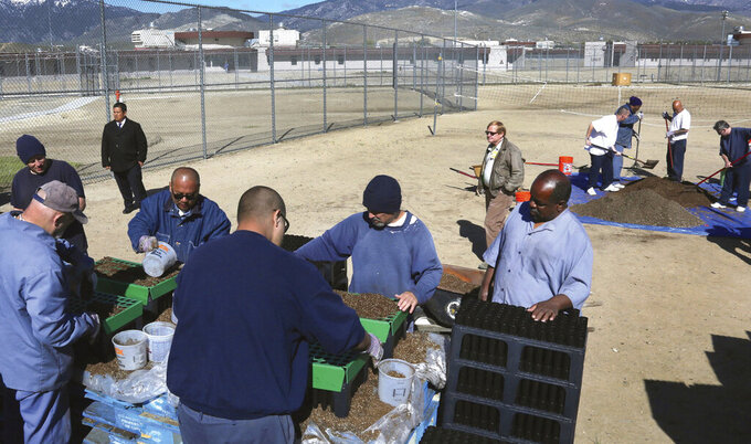 FILE - This April 26, 2016 file photo Northern Nevada Correctional Center inmates work together to sow sagebrush seeds that will be grown and planted at the prison in Carson City, Nev. At least 55 Nevada prison inmates have died after contracting COVID-19 during the pandemic that began more than a year ago, according to a newspaper report. Northern Nevada Correctional Center has had the most prisoners die after testing positive: 30, according to Corrections Department data. (Jim Grant/Nevada Appeal via AP, File)