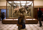 """FILE- In this Jan. 23, 2017 file photo, Rebecca Shreckengast and daughter, Hannah Shreckengast,look at the """"Arab Courier Attacked by Lions"""" diorama on display at the Carnegie Museum of Natural History in Pittsburgh, Pa.  The museum is returning to public view, Friday, July 9, 2021, a 19th-century diorama that shows lions attacking a camel and its human rider. The curtain around """"Lion Attacking a Dromedary"""" was removed last week, about a year after the Carnegie Museum of Natural History covered up the display in response to complaints about how the courier was depicted. (Nate Smallwood/Pittsburgh Tribune-Review via AP)"""