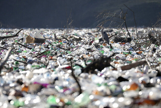 A grey heron stands between dumped plastic bottles and barrels on the bank of the Potpecko Lake on the Lim river, near city of Priboj, Serbia, Tuesday, Jan. 5, 2021. Plastic bottles and other garbage are among tons of garbage clogging rivers in Serbia, Montenegro and Bosnia that were once famous for their emerald color and crystal clear waters. (AP Photo/Dragan Karadarevic)