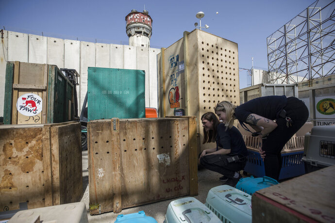 Members of Four Paws International, an animal welfare group, check on the animalas at Erez crossing on the Israel and Gaza border, Sunday, April 7, 2019. The group evacuated dozens of animals languishing in a ramshackle Gaza zoo Sunday to sanctuaries abroad, in the fourth and largest such rescue mission in the beleaguered, war-torn Palestinian enclave. (AP Photo/Tsafrir Abayov)