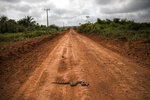 In this Sept. 2, 2019 photo, a boa constrictor slithers across a red dirt road leading to Tekohaw, in Para state, Brazil, where members of the Tembe tribes gathered to debate a plan. Some saw hope in the sustainable development plan presented at the gathering. It would include drones and other technology to curb the encroachers while helping the Tembe profit by harvesting wood, bananas and acai berries in a limited way from a part of their jungle.  (AP Photo/Rodrigo Abd)