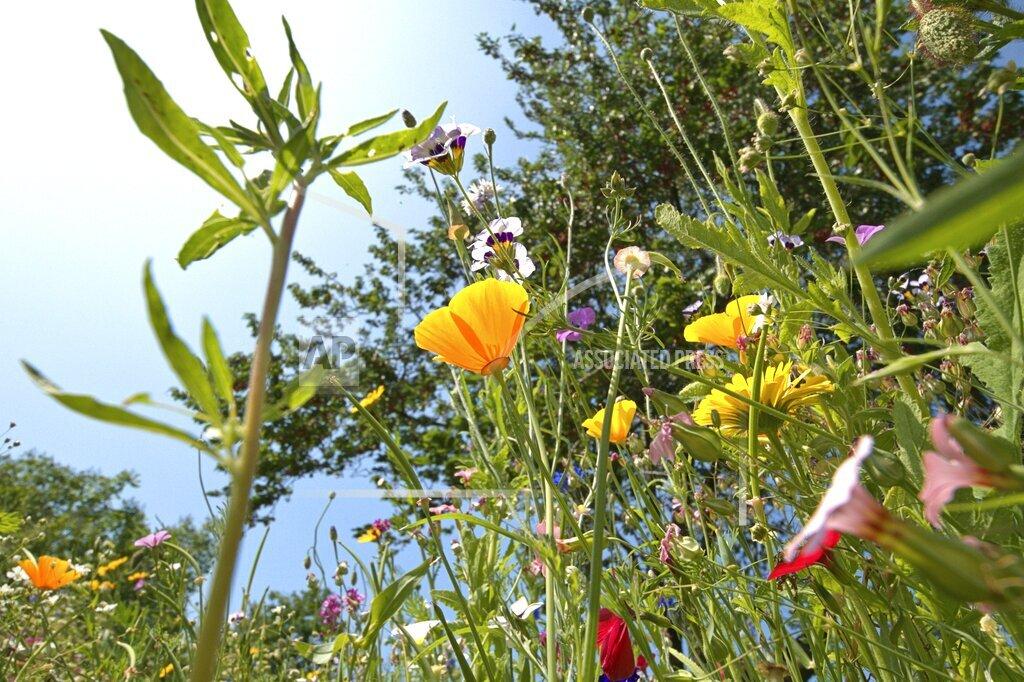 Wildflower bed in Schleswig