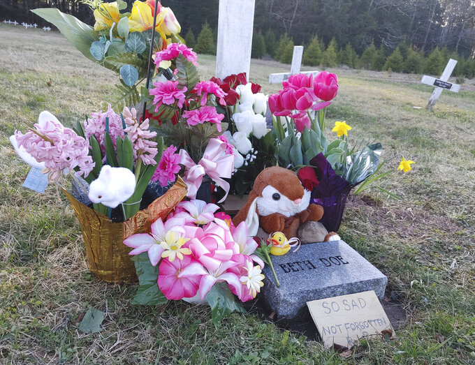 Phil Jeffries, retired funeral director and deputy coroner for Carbon County, Pa., placed a marker behind the flowers on the right, on Beth Doe and her baby's grave with their true identities, Evelyn and Emily Grace Colon, after more than four decades, in Laurytown Road Cemetery in Lehigh Township, Pa., Sunday, April 4, 2021.  Flowers and a child's toy also adorn the grave. Colon, who was known for decades here in Northeast Pennsylvania as Beth Doe, was brutally murdered and dumped off an Interstate 80 bridge in East Side borough in December 1976. (Kelly Monitz/Standard-Speaker via AP)