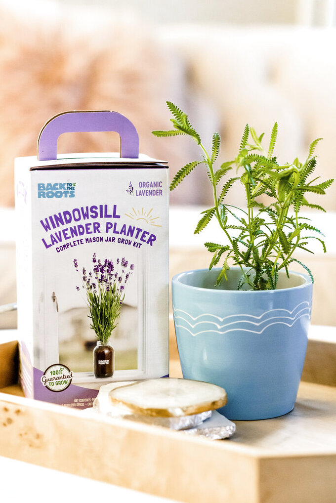 This image released by Back to the Roots shows their organic lavender windowsill planter. (Back to the Roots via AP)