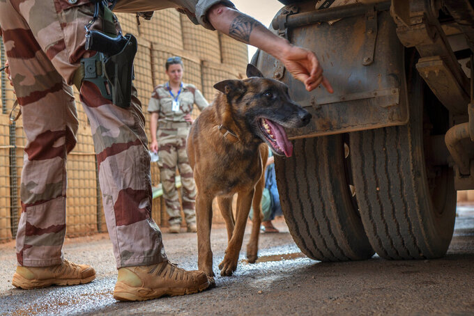 A French Barkhane Malinois looks for explosives at the entrance of the Niamey, Niger base Sunday June 6, 2021. French President Emmanuel Macron announced at a press conference Thursday June 10, 2021 That operation Barkhane would end and be replaced by support for local partners and counter terrorism. (AP Photo/Jerome Delay)