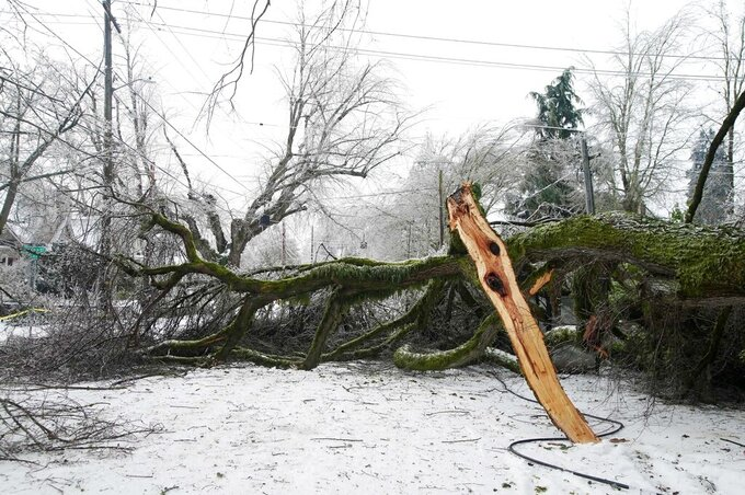 A large blocks the road along NE 24th Avenue, Monday, Feb. 15, 2021, in Portland, Ore., after a weekend winter storm toppled it. (Beth Nakamura/The Oregonian via AP)
