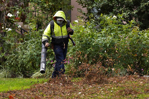 A gardener uses a leaf blower to clear leaves at a home in Sacramento, Calif., Wednesday, Oct. 13, 2021. Gov. Gavin Newsom signed 92% of the new laws lawmakers sent to him at the end of the years legislative session that ended Sept. 10. One of the bills approved clears the way for a first-ever ban on the sale of new gas-powered leaf blowers and lawn blowers. (AP Photo/Rich Pedroncelli)