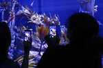 In this Friday, May 17, 2019 photo, visitors record images of sea dragons at the Birch Aquarium at the Scripps Institution of Oceanography at the University of California San Diego in San Diego. The Southern California aquarium has built what is believed to be one of the world's largest habitats for the surreal and mythical sea dragons outside Australia, where the native populations are threatened by pollution, warming oceans and the illegal pet and alternative medicine trades. (AP Photo/Gregory Bull)