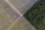 In this Nov. 30, 2019 photo, a fragment of Amazon rainforest stands next to soy fields in Belterra, Para state, Brazil. The Amazon, which has lost about 17% of its original forest, is nearing an irreversible tipping point. In that sense, Brazil itself is at a crossroads. (AP Photo/Leo Correa)