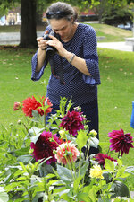 Denise Armitage of Toowoomba, Queensland, Australia, photographs dahlias at gardens in Town Square in Anchorage, Alaska, Thursday, Aug. 15, 2019. Alaska recorded its warmest month ever in July and hot, dry weather has continued in Anchorage and much of the region south of the Alaska Range. (AP Photo/Dan Joling)