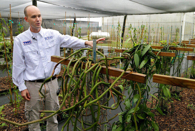 In this Thursday, Dec. 19, 2019, photo, Alan Chambers, assistant professor of horticultural studies at UF/IFAS, talks about different Vanilla trees planted at a shade house as part of a study on growing Vanilla in South Florida, at the University of Florida Tropical Research and Education Center in Homestead, Fla. The study is  directed by Chambers. University of Florida scientists believe South Florida has promise as a place to grow the plants that produce one of the world's most popular flavors. (Pedro Portal/Miami Herald via AP)