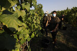 Antonia Palma smiles during the grape harvest in the vineyard of Casale del Giglio, in Latina, near Rome, Wednesday, Sept. 16, 2020. The grape harvest has changed in some big ways,