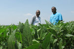In this Wednesday, June 25, 2018 photo, David Allen Hall, left, and Tyrone Grayer pose for a photo in their soybean field, in Parchman, Miss. Hall and Grayer are farmers who are suing a seed company, alleging they were sold faulty soybean seeds because of their race. The company denies the allegations. (AP Photo/Adrian Sainz)