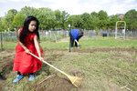 In this May 11, 2019 photo, Pratisna Tamang, 4, helps her family by raking dirt while working on a community garden plot at the Franciscan Sisters of the Poor in Hartwell, a neighborhood in Cincinnati. The majority of gardeners on this acre are refugees, some of the 12,000 Bhutanese who have resettled in Cincinnati. Most, like Tamang, came to this country after spending years, if not decades, in Nepalese camps. (Albert Cesare/The Cincinnati Enquirer via AP)