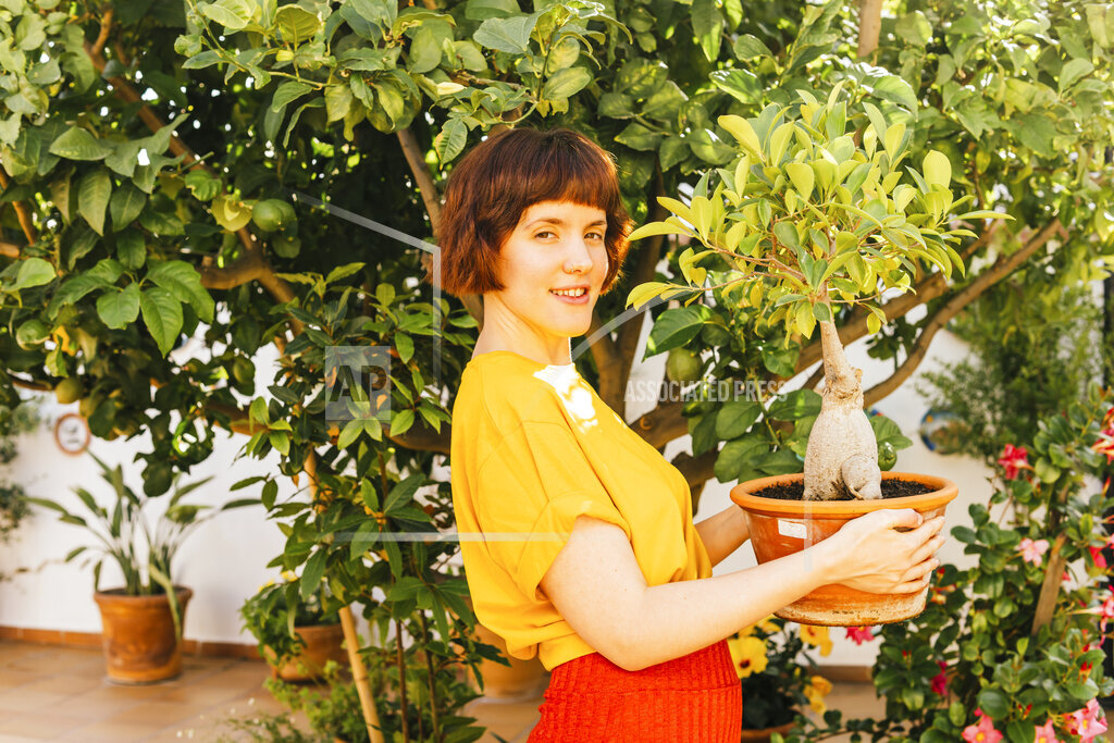 Smiling woman holding Ficus Microcarpa plant by tree in backyard