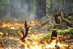 In this June 11, 2019 firefighters keep an eye on a prescribed burn in Kings Canyon National Park, Calif. The prescribed burn, a low-intensity, closely managed fire, was intended to clear out undergrowth and protect the heart of Kings Canyon National Park from a future threatening wildfire. The tactic is considered one of the best ways to prevent the kind of catastrophic destruction that has become common, but its use falls woefully short of goals in the West. (AP Photo/Brian Melley)