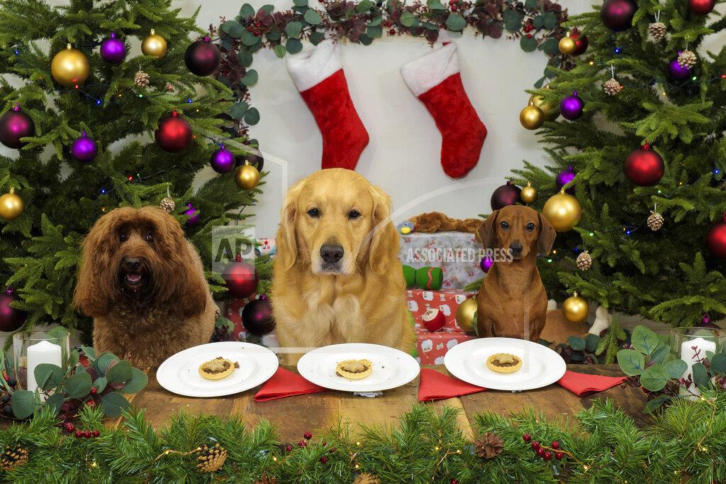 Santa Paws Dinner
