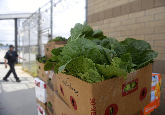 The year's first harvest sits stacked on Thursday, June 3, 2021, in Westover, Md., after inmates at Eastern Correctional Institution in Somerset County, Maryland, tended gardens on the prison grounds. The program grows thousands of pounds in organic produce each year that are given to local families. (Kelly Powers/The Daily Times via AP)