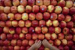 In this Thursday, Aug. 15, 2019, photo, Rian Gatewood-Hillestad plays with apples while shopping with his parents at Pete's Market in Chicago's Garfield Neighborhood. Christopher