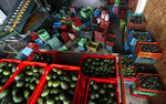 In this Oct. 2, 2019 photo, a worker wipes his hands while filling crates with avocados at a packing warehouse in Ziracuaretiro, Michoacan. The region's avocado boom, fueled by soaring U.S. consumption, has drawn parts of western Mexico out of poverty in just 10 years. But the scent of money has drawn gangs and hyper-violent cartels. (AP Photo/Marco Ugarte)