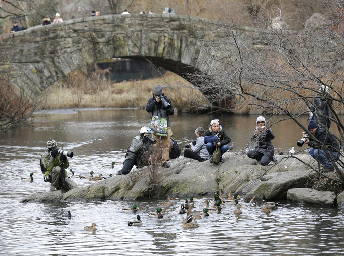 FILE - In this Dec. 5, 2018 file photo, people try to get a look at and pictures of a Mandarin duck in Central Park in New York. The pandemic, which shut so many people inside their homes, has led to an increased appreciation of nature in general, and of outdoor activities like hiking, gardening and birding. Folks who have been bird-watching in Central Park for years say they see lots of newcomers to the hobby. (AP Photo/Seth Wenig, File)