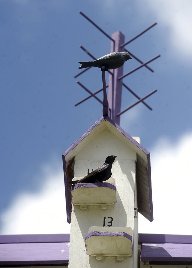 A Martin sits outside its nest in a decorative, multi-tiered birdhouse Howard Orphey created for the migratory birds to nest and raise their young. Photo taken Monday, May 4, 2020. (Kim Brent/The Beaumont Enterprise via AP)