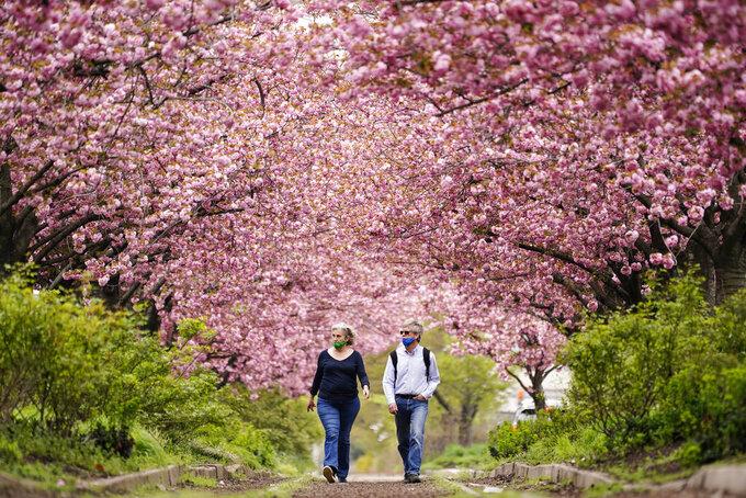 People wearing face masks as a precaution against COVID-19 walk beneath blossoming cherry trees along Columbus Boulevard in Philadelphia, Wednesday, April 14, 2021. (AP Photo/Matt Rourke)
