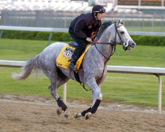 FILE - Kentucky Derby entrant Tapit, with exercise rider Jon Ferriday up, works out along the backstretch at Churchill Downs in Louisville, Ky., in this April 29, 2004, file photo. Only eight grays have won the past 90 runnings of the Kentucky Derby horse race. According to historians and experts, there are just fewer of them in the thoroughbred population compared to more traditional chestnut, bay,  brown and black horses. But with light gray Tapit siring Essential Quality and others, horses of that color could be making a comeback at the elite level of racing.(AP Photo/Timothy D. Easley, File)