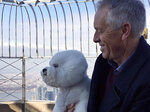 Handler Bill McFadden holds Flynn, a bichon frise, on top of the Empire State Building Wednesday, Feb. 14, 2018, the morning after Flynn was named best in show at the 142nd Westminster Kennel Club Dog Show, in New York. (AP Photo/Jeff McMillan)