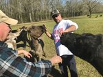 Hunter Tynes, center, feeds one of his cows and holds back one of his donkeys Saturday, Feb. 8, 2020, on his acreage along the Amite River in western St. Helena Parish while Michael Armstrong, left, who lives nearby, talks to Tynes. Both men and their families are opposed to the proposed Darlington Dam, which would require their property to be bought out.  (David J. Mitchell/The Advocate via AP)
