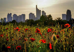 Poppy flowers grow in a meadow in front of the buildings of the banking district in Frankfurt, Germany, Thursday, June 10, 2021. (AP Photo/Michael Probst)