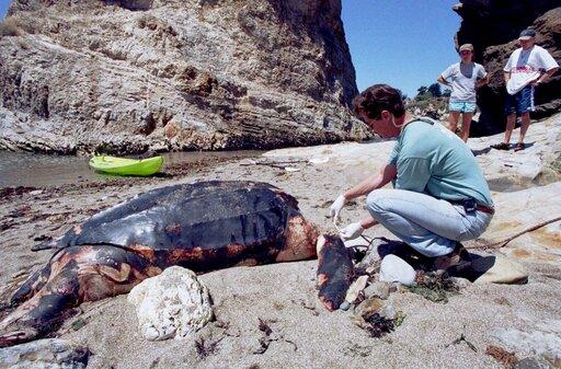 California Sea Turtle Endangered