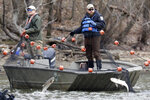 Workers from natural resource agencies use nets to drive Asian carp to a fish pump which removes them from Kentucky Lake near Golden Pond, Ky., Monday, Feb. 17, 2020. The harvesting method mainly targets bighead and silver carp, two of the four invasive carp species collectively known as Asian carp in the U.S. Both bighead and silver carp devour plankton that form the base of the food chains, grow rapidly and reproduce prolifically, outcompeting many native fish. (AP Photo/Mark Humphrey)