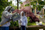 Beekeepers Sean Kennedy, left, and Erin Gleeson, right, prepare to capture a swarm of honey bees and relocate them to a bee hive, Friday, May 1, 2020, in Washington. The District of Columbia has declared beekeepers as essential workers during the coronavirus outbreak. If the swarm isn't collected by a beekeeper, the new hive can come to settle in residential backyards, attics, crawlspaces, or other potentially ruinous areas, creating a stinging, scary nuisance. (AP Photo/Andrew Harnik)