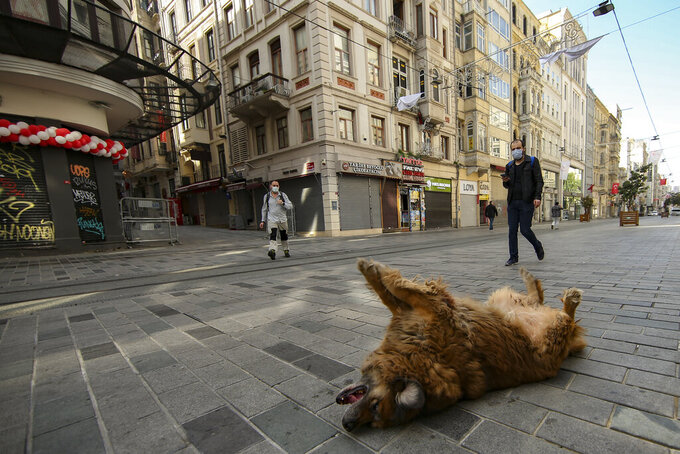 A dog lays on a virtually empty Istiklal Street, in Istanbul, Friday, April 30, 2021, on the first day of a tight lockdown to help protect from the spread of the coronavirus. Turkish security forces on Friday patrolled main streets and set up checkpoints at entry and exits points of cities, to enforce Turkey's strictest COVID-19 lockdown to date. Still, many people were on the move as the government, desperate not to shut down the economy completely, kept some sectors exempt from the restrictions. (AP Photo/Emrah Gurel)