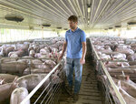 In this Tuesday, June 25, 2019, photo, farmer Matthew Keller walks through one of his pig barns near Kenyon, Minn. When the Trump administration announced a $12 billion aid package for farmers struggling under the financial strain of his trade dispute with China, the payments were capped. But records obtained by The Associated Press under the Freedom of Information Act show that many large farming operations easily found legal ways around the limits to collect big checks. Recipients who spoke to AP defended the payouts, saying they didn't even cover their losses under the trade war and that they were legally entitled to them. Keller, who also grows crops to feed his livestock, said he