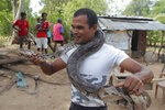 A Sri Lankan Telugu man Timmannage Saman stands with a python around him as he checks his serpents outside his dwelling in Nachchikulama, Sri Lanka, Wednesday, June 17, 2020. Sri Lanka's Telugu community, whose nomadic lifestyle has increasingly clashed with the modern world, is facing another threat that could hasten its decline: the COVID-19 pandemic. (AP Photo/Eranga Jayawardena)