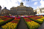 Tulips, waiting to be picked for free, are put on display on Dam Square in front of the Royal Palace in Amsterdam, Netherlands, Saturday, Jan. 18, 2020, on national tulip day which marks the opening of the 2020 tulip season. (AP Photo/Peter Dejong)