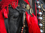 In this Sunday, Jan. 6, 2019, photograph a horse wearing colorful decorations waits before an Epiphany celebration horse race in Pietrosani, Romania. The horse race tradition started in the area more then one hundred years ago, according to locals, and it was banned during the years of Communist rule, due to its association with a religious holiday. (AP Photo/Vadim Ghirda)