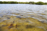 Seasonal algae floats in the water off Port Manatee, on Tuesday, 6, 2021, in Palmetto, Manatee County, Fla., where authorities responding to a leaking wastewater pond at the old Piney Point phosphate plant reopened a nearby stretch of U.S. 41 that had been closed for days between Manatee and Hillsborough counties. A mandatory evacuation order near the leaking Florida wastewater reservoir that affected more than 300 homes and additional businesses has been lifted. (Douglas R. Clifford/Tampa Bay Times via AP)