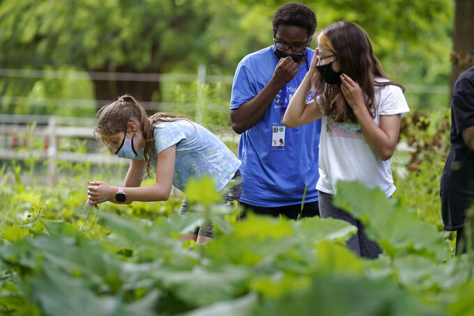 Jamil Boykin, center, camp educator at the Mass Audubon's Boston Nature Center and Wildlife Sanctuary, examines wild sorrel with students Nesha Moskowitz, left, and Lyla Mendoza, right, during a hike at the sanctuary, in the Mattapan neighborhood of Boston, Wednesday, June 23, 2021. Audubon Society chapters are grappling with how to address their namesake's legacy as the nation continues to reckon with its racist past. John James Audubon was a celebrated 19th century naturalist but also a slaveholder publicly opposed to abolition. (AP Photo/Steven Senne)