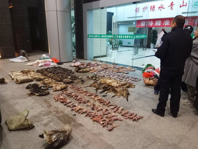FILE - In this Jan. 9, 2020, file photo provided by the Anti-Poaching Special Squad, police look at items seized from store suspected of trafficking wildlife in Guangde city in central China's Anhui Province. As China enforces a temporary ban on the wildlife trade to contain the outbreak of a new virus, many are calling for a more permanent solution before disaster strikes again. (Anti-Poaching Special Squad via AP, File)
