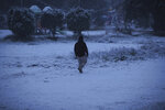 A man walks in a fresh snow in Baghdad, Iraq, Tuesday, Feb. 11, 2020. (AP Photo/Hadi Mizban)