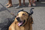 A costumed dog participates in the