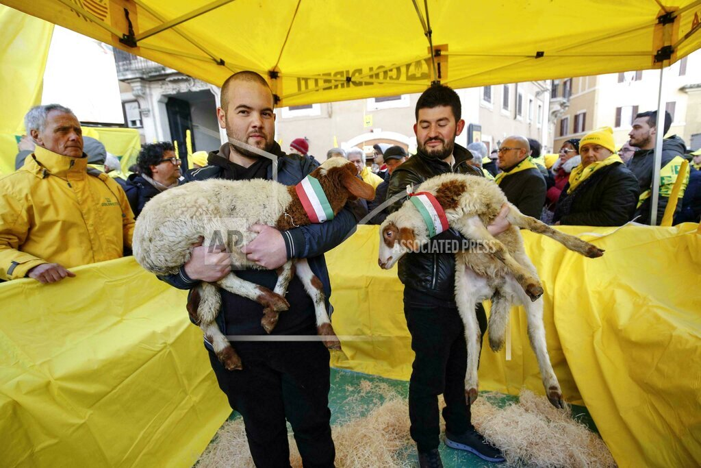 Sardinian dairy farmers stage a protest in Rome