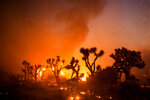Joshua trees are consumed by the Bobcat Fire in Juniper Hills, Calif., Friday, Sept. 18, 2020. (AP Photo/Ringo H.W. Chiu)